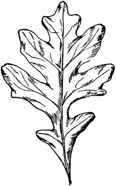 236x377 Oak Leaf Pattern. Use The Printable Outline For Crafts, Creating