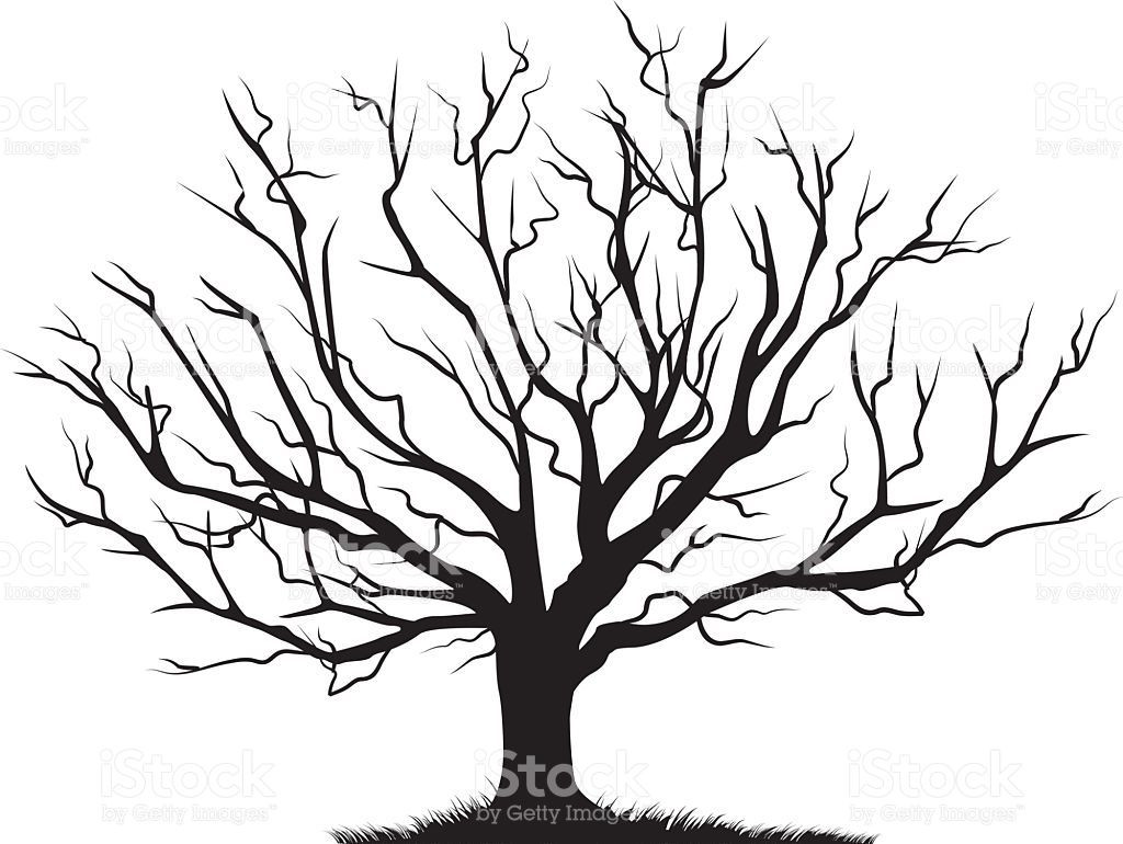 1024x770 Bare Old Dry Dead Tree Silhouette Without Leaf Vector Oak Crown