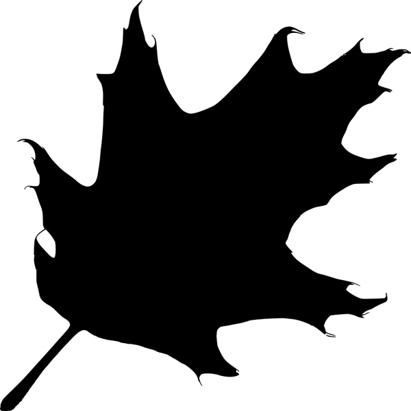 600x599 Oak Leaf Silhouette Free Vector In Open Office Drawing Svg ( Svg