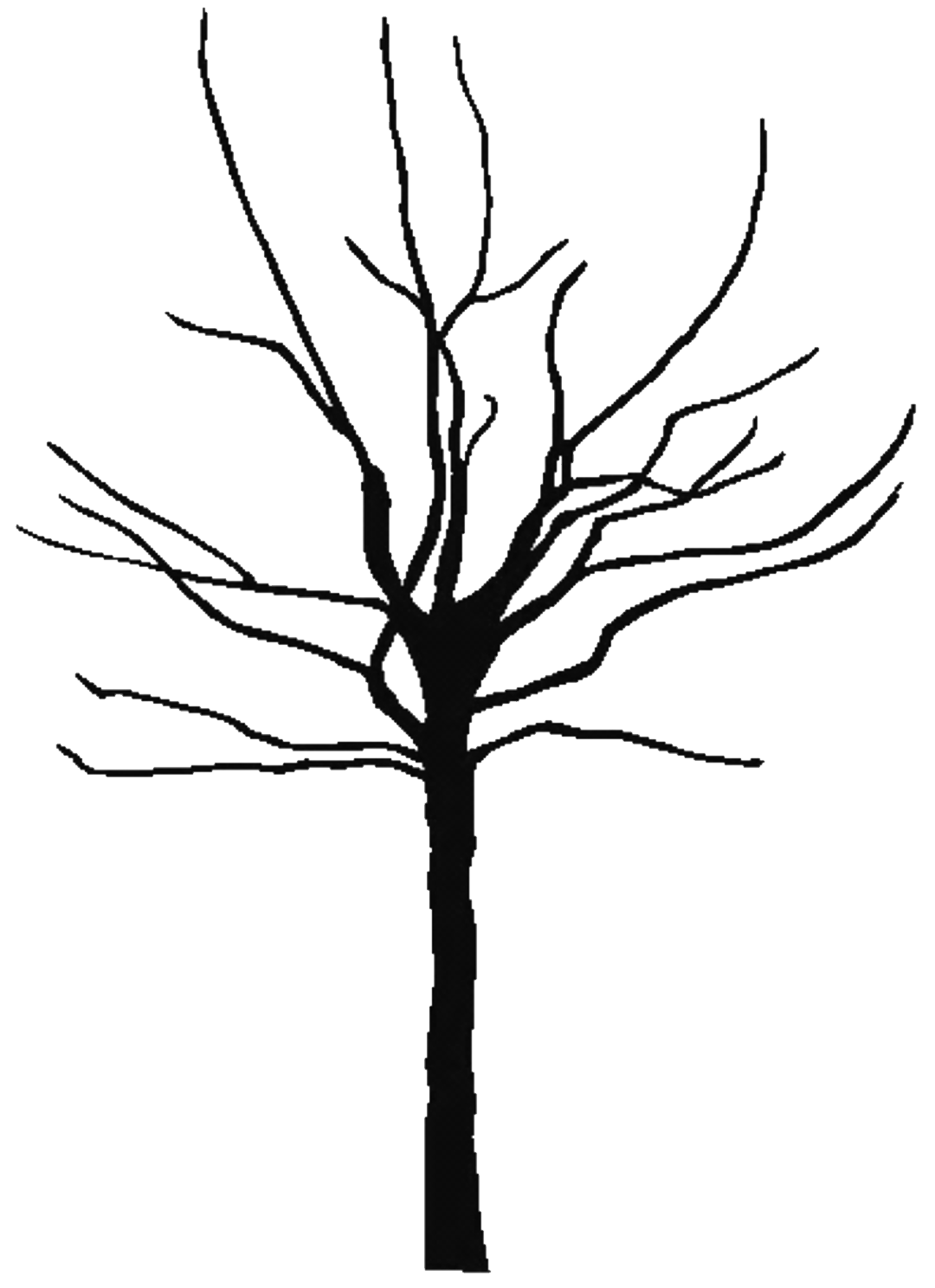1080x1488 Bare Oak Tree Clipart