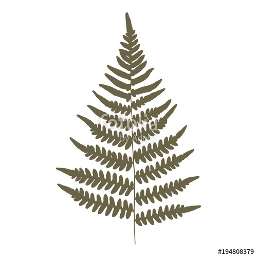 500x500 Fern. Green On A White Background. Silhouette. Isolated. Vector