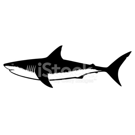 440x440 Great White Shark Silhouette Isolated On White Stock Vector
