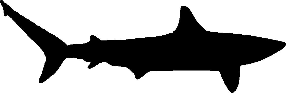 1125x368 6 Shark Silhouette (Png Transparent)