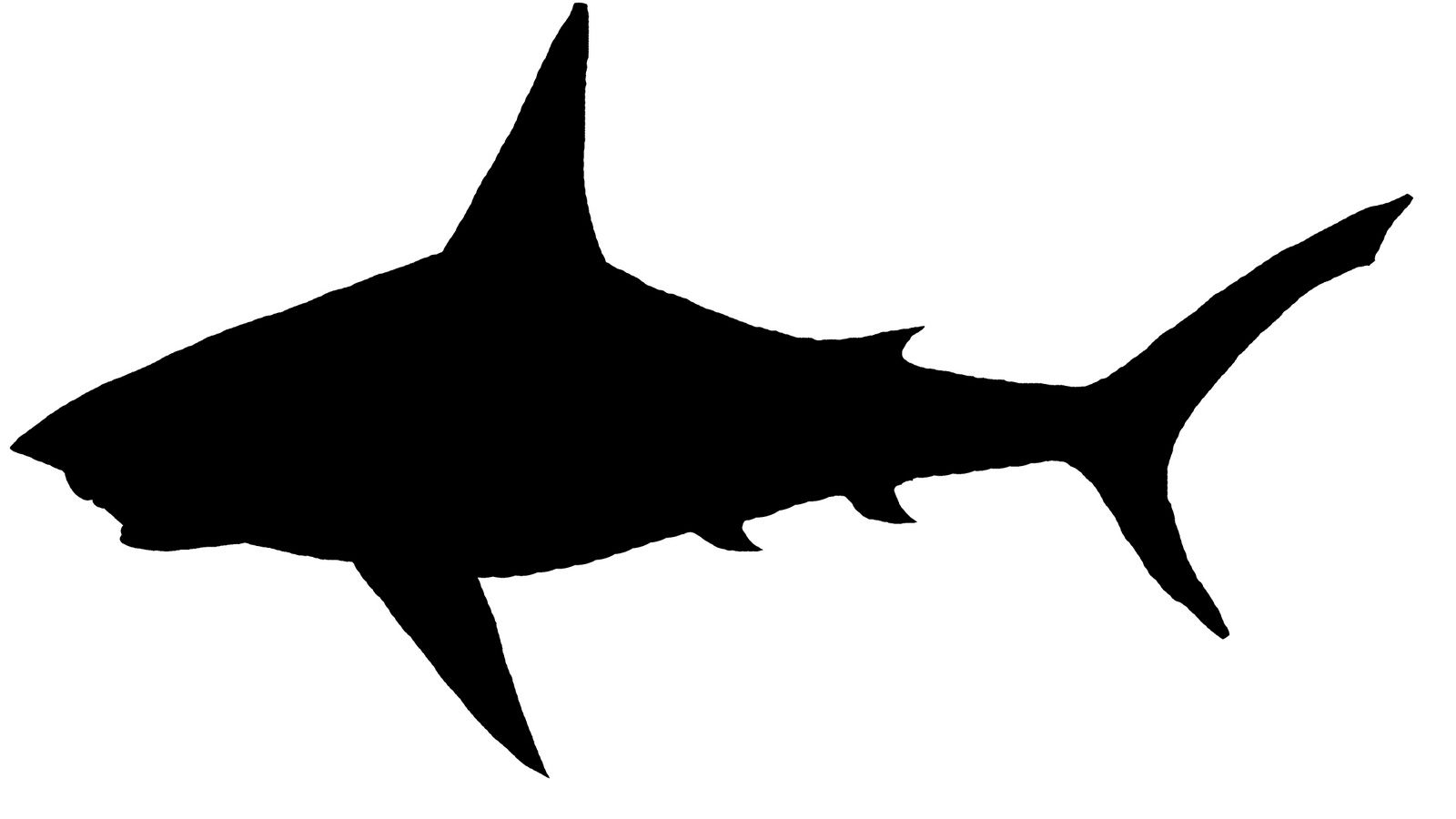 1600x900 Silouettemn Jack's Party Shark, Silhouettes