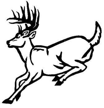 336x349 Deer Drawing Clipart
