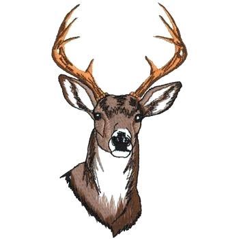 350x350 Deer Head Pictures Deer Head Whitetail Deer Head Pictures