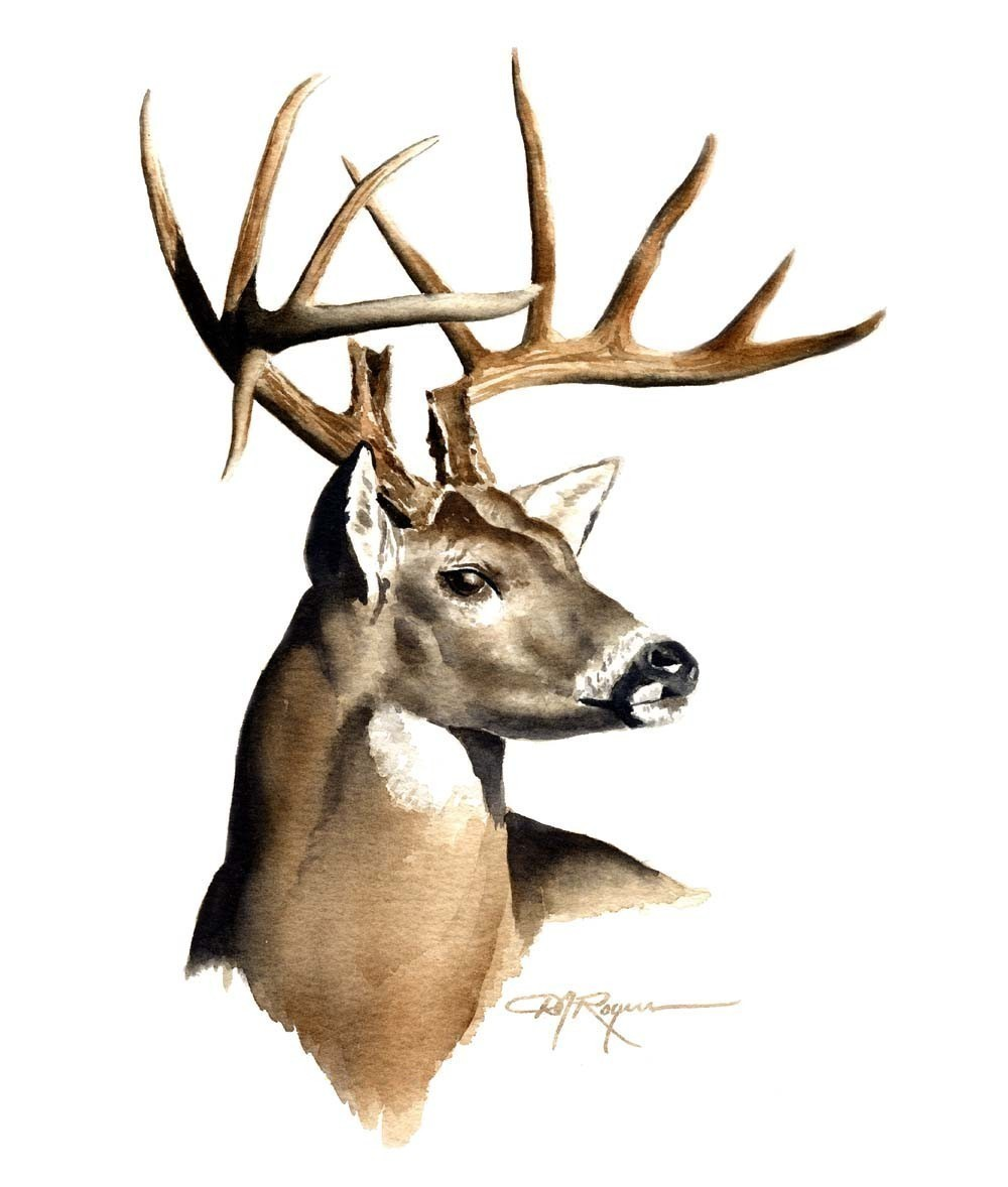 1000x1178 White Tailed Deer Clipart Pencil Drawn