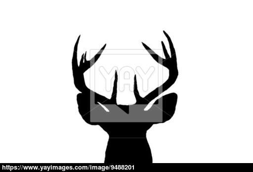 512x347 Whitetail Deer Buck Silhouette Image