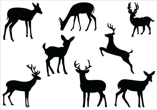 501x351 Deer Head Coloring Pages Art A Deer Head Coloring For Kids Animal