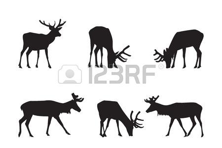 450x300 Whitetail Deer Clipart