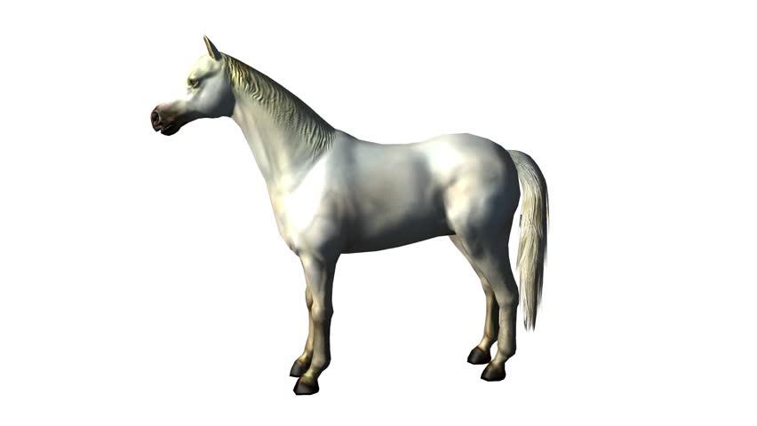 Wild Horse Silhouette