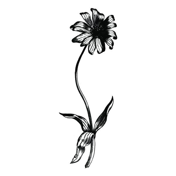 600x600 Pin By Emma Parkinson On Accessories Wildflowers