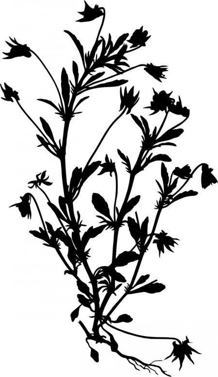450x776 Wildflower