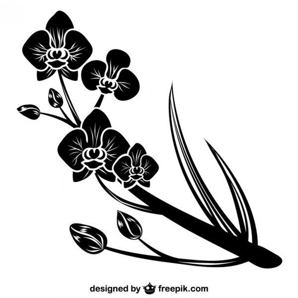 600x600 Black Orchid Silhouette Free Vector 123freevectors