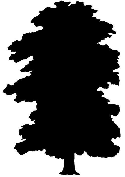 495x700 Tree Silhouettes Elm Tree, Tree Silhouette And Silhouettes