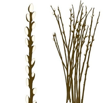 350x350 Willow Tree Branches Clip Art, Catkins, Spring, Easter, Pussywillow