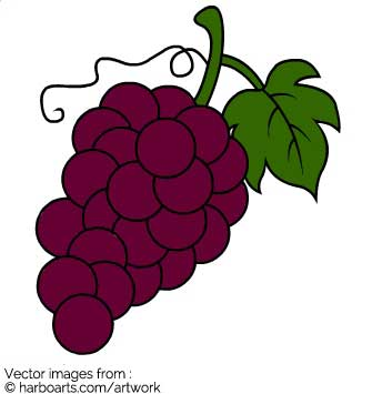 335x355 Download Wine Grapes