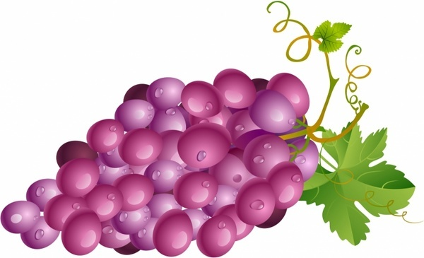 600x365 Grape Free Vector Download (413 Free Vector) For Commercial Use