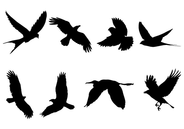 700x490 Free Flying Bird Silhouette Vector 116097