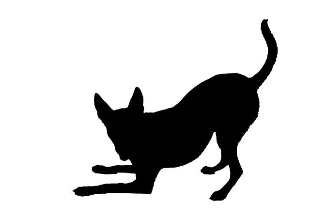 640x450 Black Dog As A Metaphor