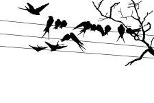 225x150 Bird Silhouette Images ~ Karen's Whimsy