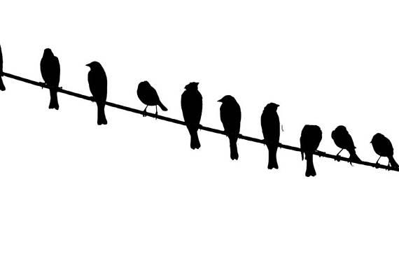 570x386 Nice Bird On A Wire Silhouette Frieze