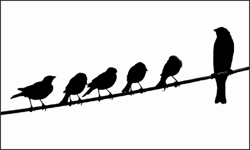827x498 Silhouette Of Birds On Wire Suado Elegant Silhouette Birds