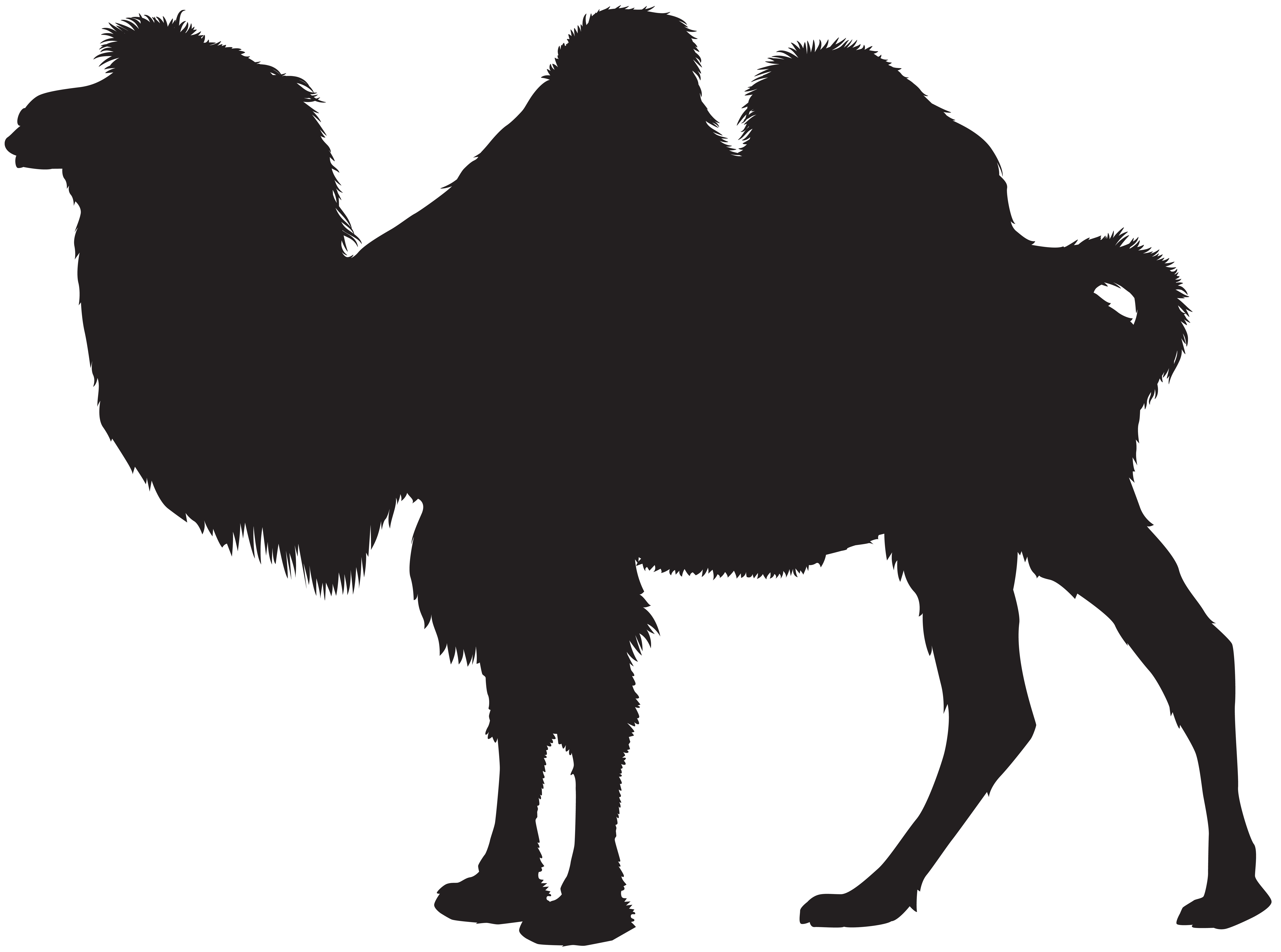 8000x5948 Clipart Camel Silhouette