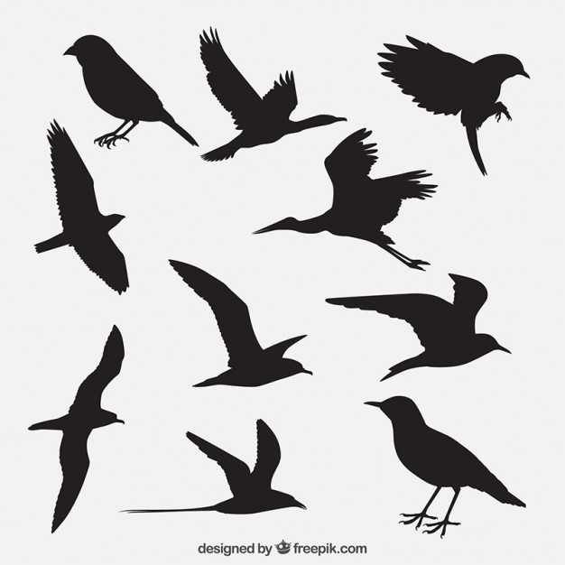 626x626 Bird Silhouettes Pack Vector Free Download