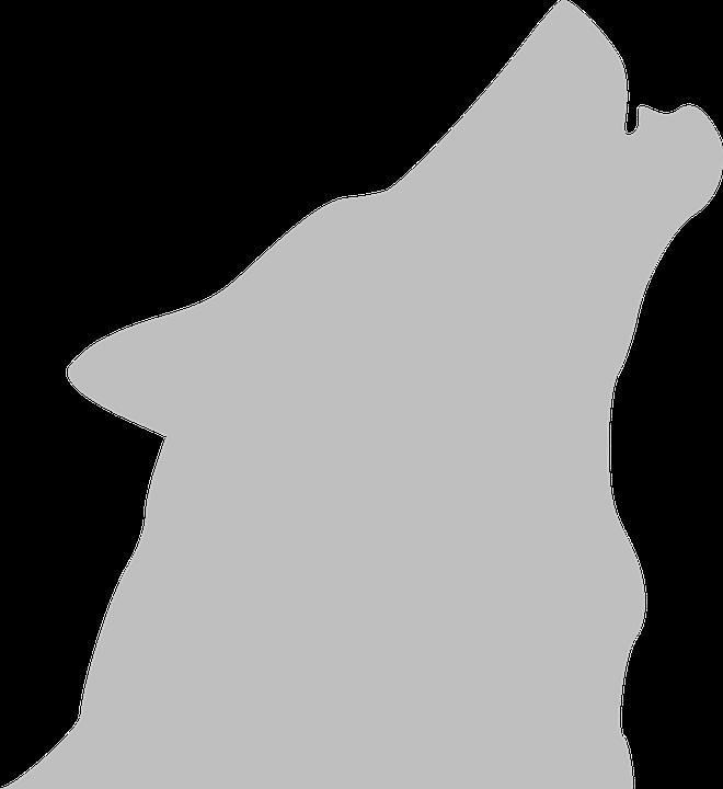 660x720 White Wolf Clipart Wolf Howl