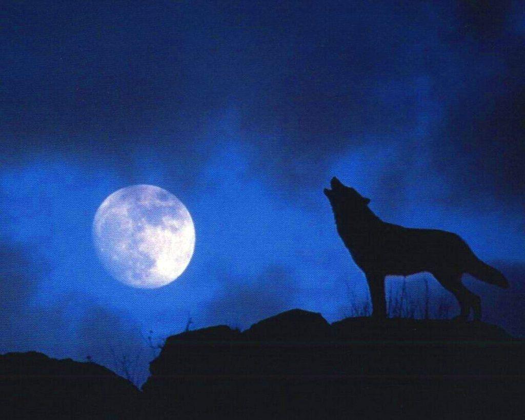 1024x819 Pin By Natalia Tretiakova On Silhouettes Wolf