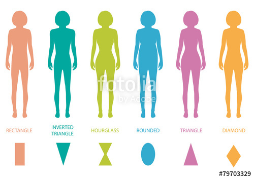 500x353 Female Body Types Anatomy,woman Front Figure Shape, Vector Stock