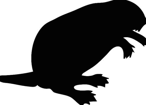 595x429 Black, Dark, Outline, Beaver, Work, Silhouette, Wood, Timber, Tail