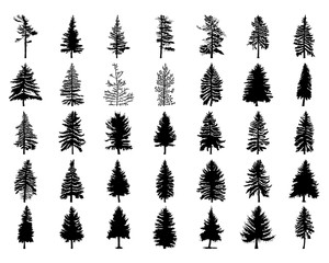 300x240 Pine Tree Isolated On White Background, Silhouette Woods And Fir