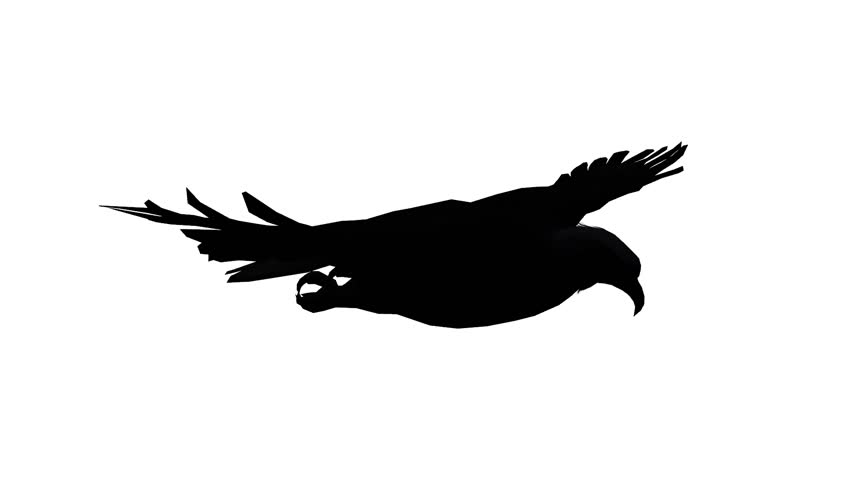 852x480 Eagle Inciting Wings Flying Gliding,haliaeetus Leucocephalus Bird