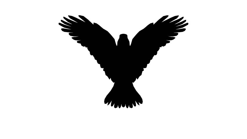 852x480 Silhouette Looping Flying Eagle Front View Stock Footage Video