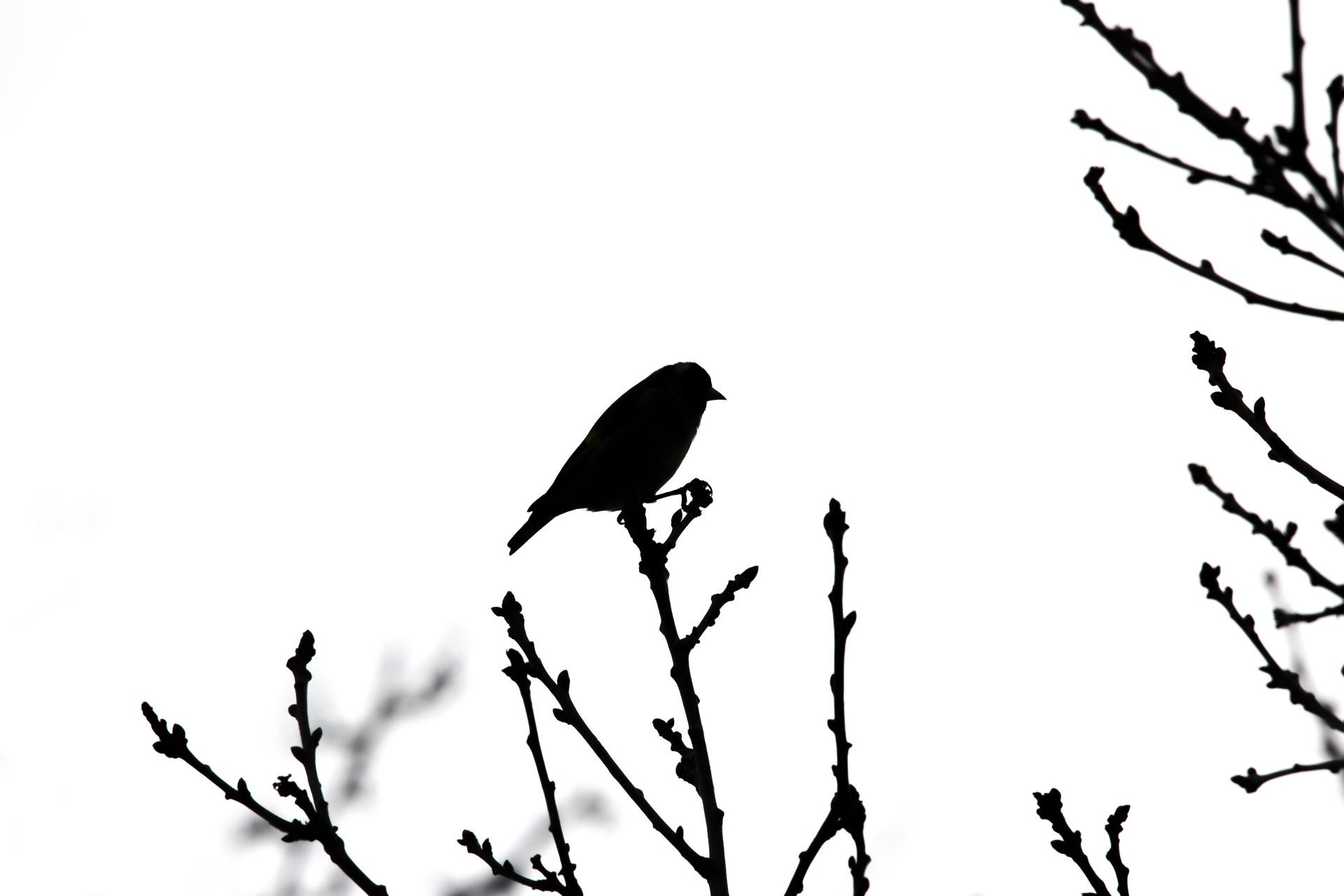 1920x1280 Bird Silhouette Free Stock Photo