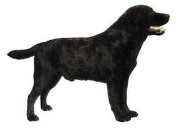 350x253 Labrador Decals Police K9, Military K9 And Schutzhund Working Dog
