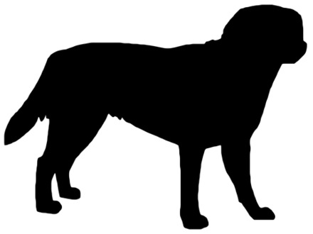 440x330 43 Yellow Lab Coloring Pages, Labrador Retriever Colouring Pages