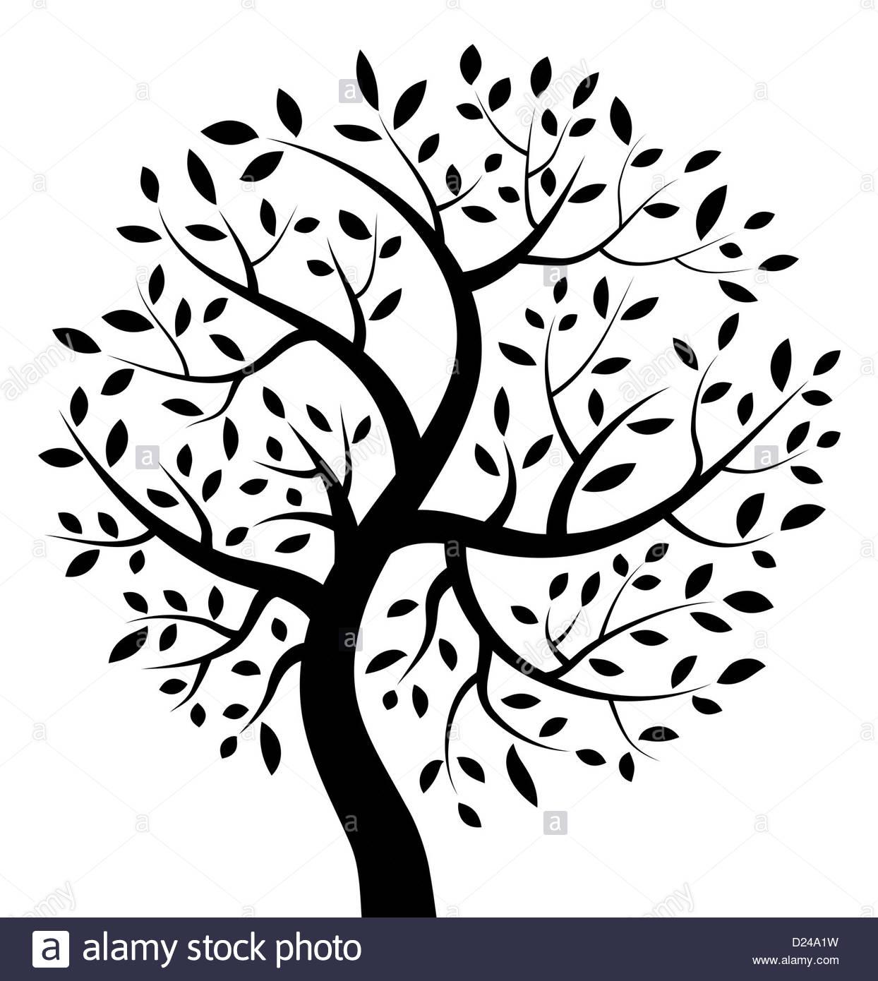 1244x1390 Family Tree Illustration Black And White Stock Photos Amp Images