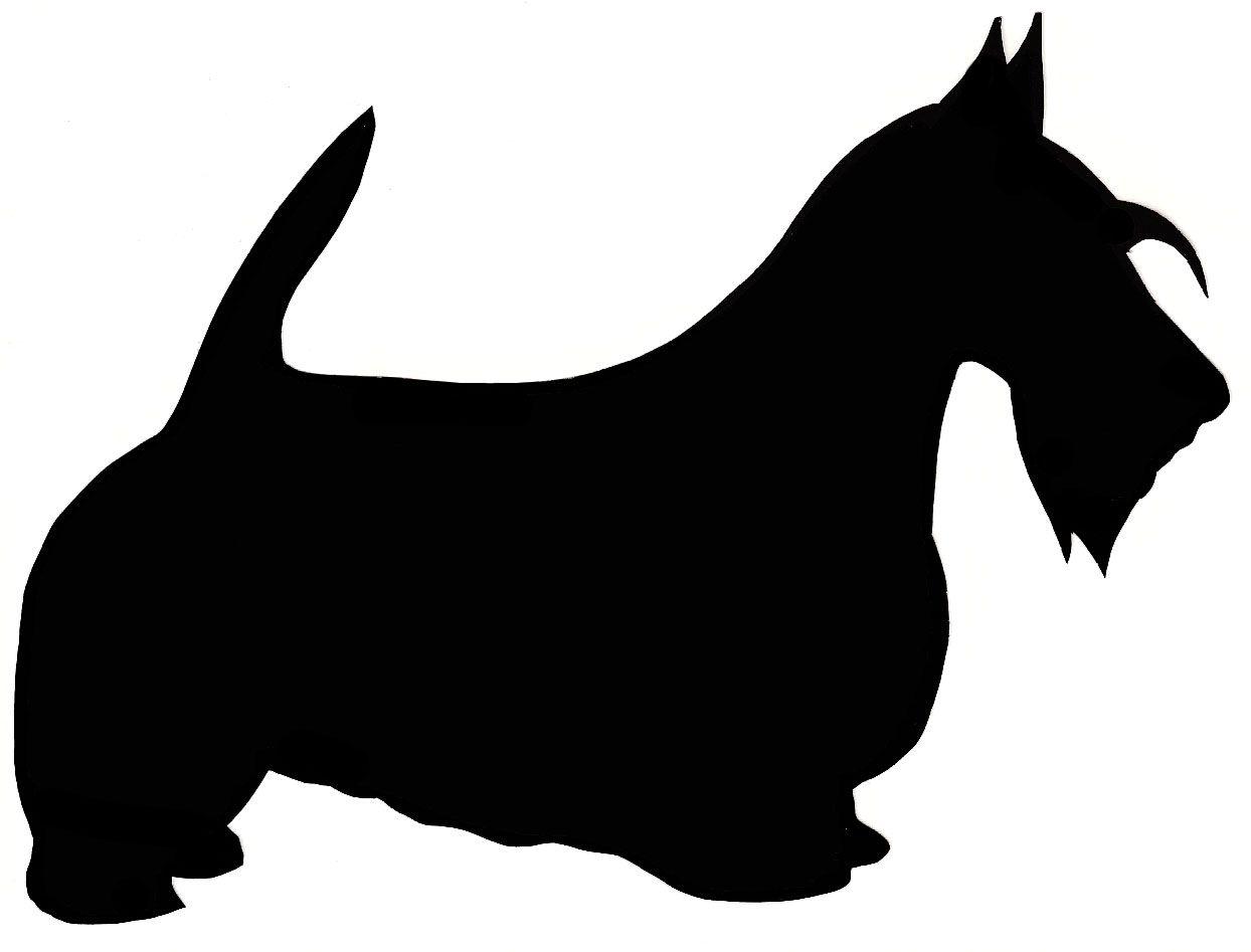 1244x947 Scottish Terrier
