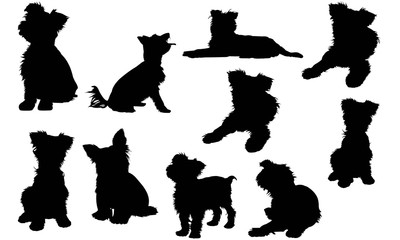 400x240 Yorkshire Terrier Dog Photos, Royalty Free Images, Graphics