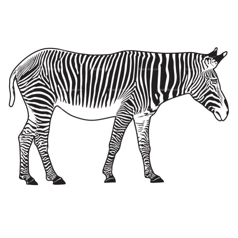 800x800 Zebra Silhouette Clip Art Clipart Panda