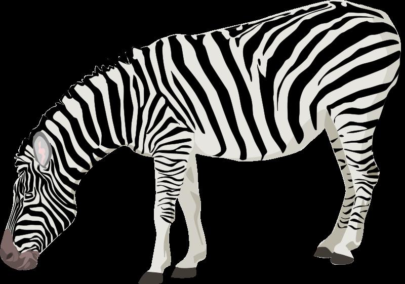 800x561 Zebra Silhouette Clipart
