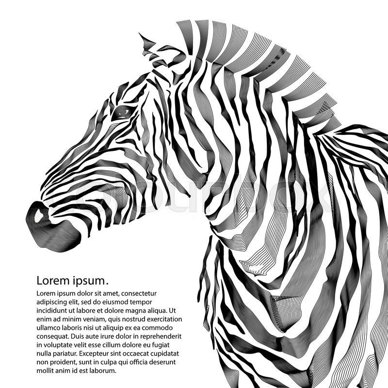 800x800 Animal Illustration Of Vector Zebra Silhouette. Eps Vector Stock