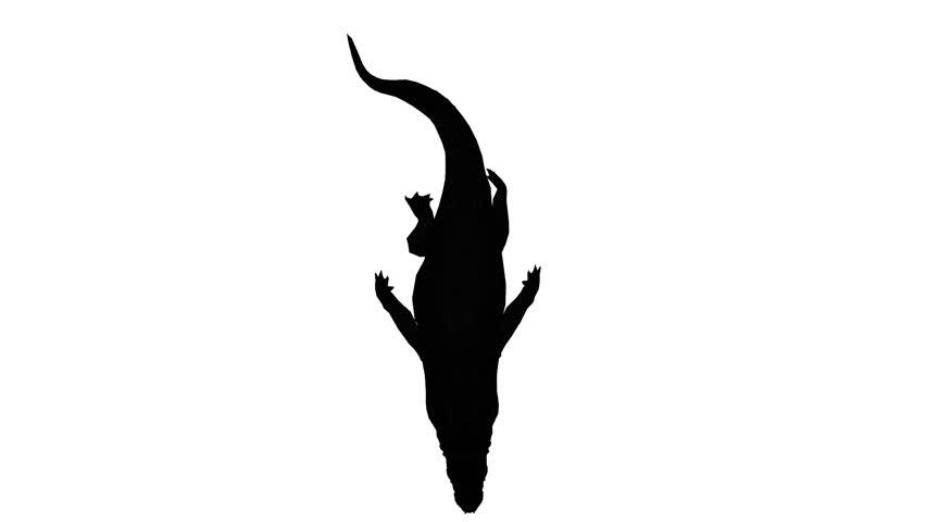 852x480 Crocodile Alligator Reptile Caiman Zoo Danger Africa Teeth Footage