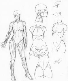 236x282 Karakalem Anatomi Model Pose Référence