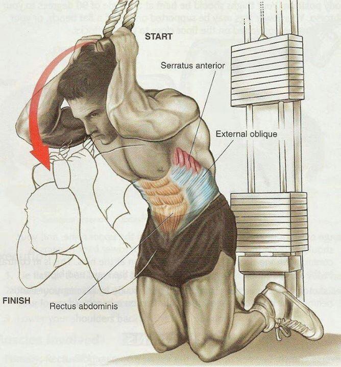 668x720 720 meilleures images d'entraînement anatomiques sur des séances d'entraînement