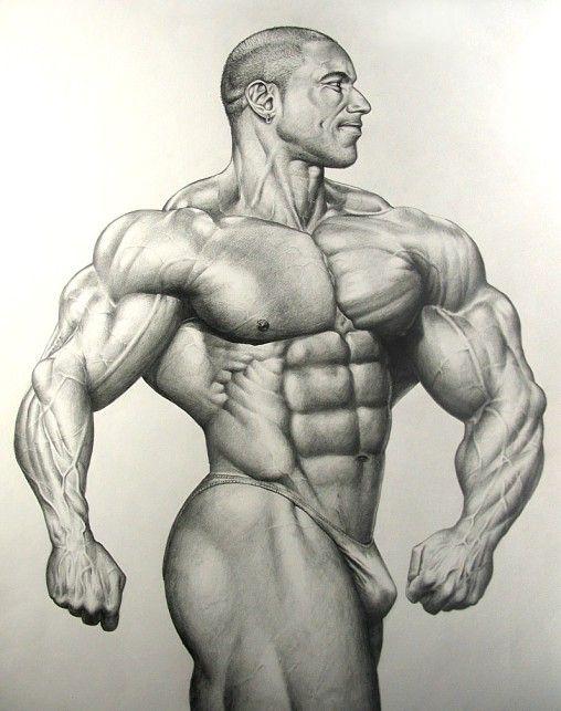 508x643 Bodybuilder dessin et livre gratuit