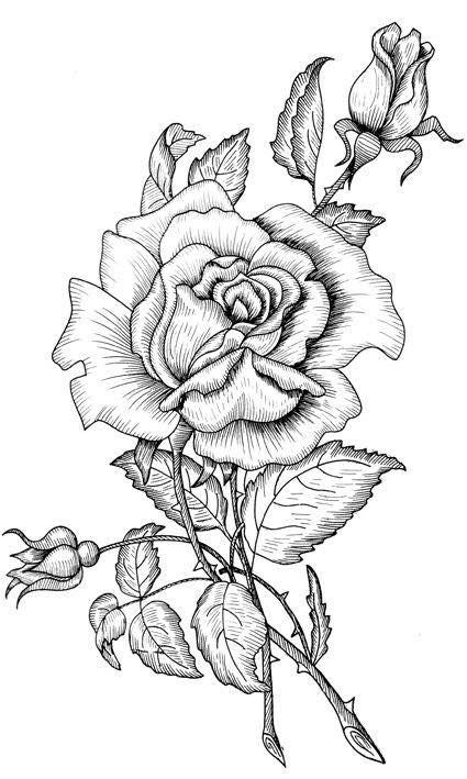 A Beautiful Rose Drawing